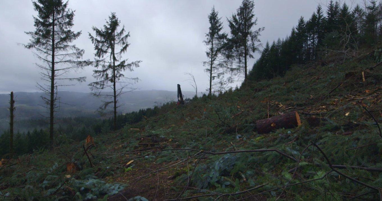 temps de forêts 2.jpg