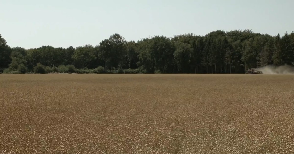 A COMME AGRICULTURE – Récolte dulin.